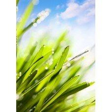 Фотообои - Зеленая трава
