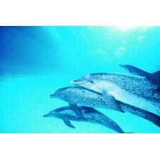 Фотообои - Под водой