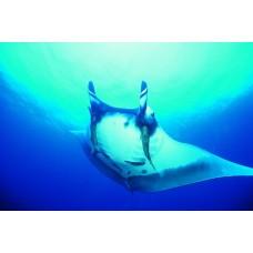 Фотообои - Индийский океан