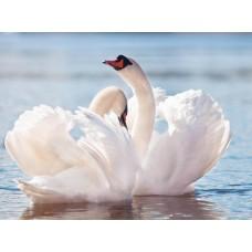 Фотообои - Лебедь