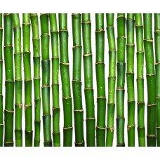 Фотообои - Бамбук