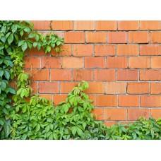 Фотообои - Кирпичная стена