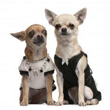 Фотообои - Две собачки