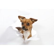 Фотообои - Милая собачка
