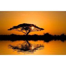 Фотообои - Африканское солнце
