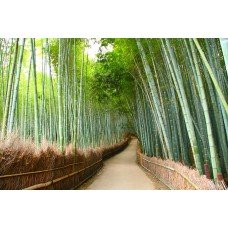 Фотообои - Бамбуковая роща