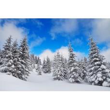 Фотообои - Зимний лес