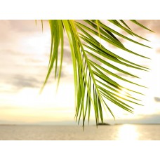 Фотообои - Листья пальмы