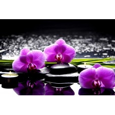 Фотообои - Орхидеи и камни
