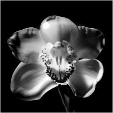 Фотообои - Цветок - макро