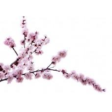 Фотообои - Персиковый цветок