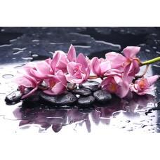 Фотообои - Лилии на камнях