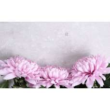 Фотообои - Цветы