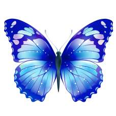 ЧБ Раскраски - Бабочки