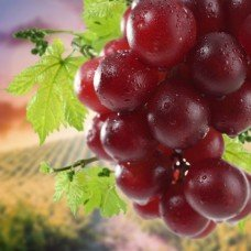 Фотообои - Ягоды винограда