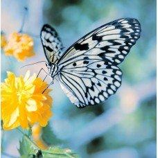 Фотообои - Бабочка с белыми крыльями
