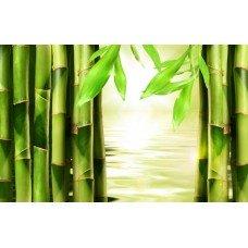 Фотообои - Бамбук в воде