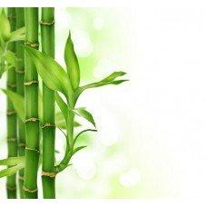Фотообои - Бамбуковые стебельки