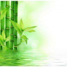 Фотообои - Бамбуковые стебли