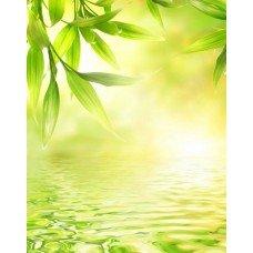 Фотообои - Зеленый фон