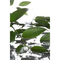 Фотообои - Листья деревьев