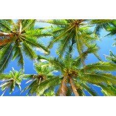 Фотообои - Пальмы на острове