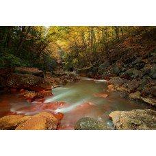 Фотообои - Аризонский лес
