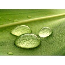 Фотообои - Отражение в росе