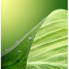 Фотообои - Лист растения