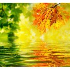 Фотообои - Желтые листки над водой