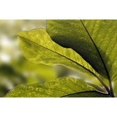 Фотообои - Зеленые листья