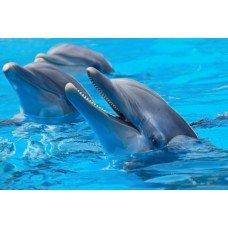 Фотообои - Дельфинарий