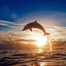 Фотообои - Морской странник