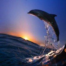 Фотообои - На гребне волны