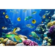 Фотообои - Морской мир