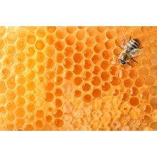 Фотообои - Пчелиный улей
