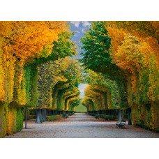 Фотообои - Арка из деревьев
