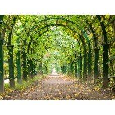 Фотообои - Ворота в лес