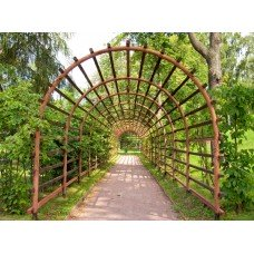 Фотообои - Зеленый туннель