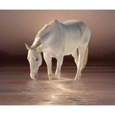 Фотообои - Белый конь