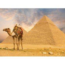 Фотообои - Верблюд в Египте
