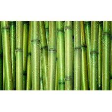 Фотообои - Стебли бамбука