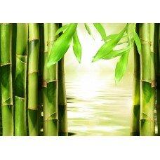 Фотообои - Бамбуковый пейзаж