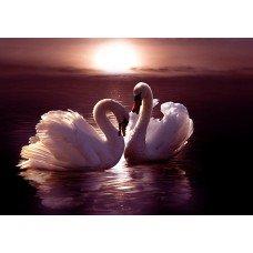 Фотообои - Два лебедя