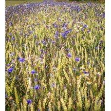 Фотообои - Полевые травы
