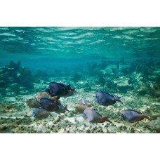 Фотообои - Морские рифы