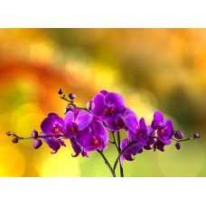 Фотообои - Орхидея