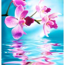Фотообои - Лепестки над водой