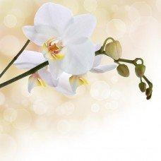 Фотообои - Ветка орхидеи