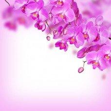 Фотообои - Орхидеи